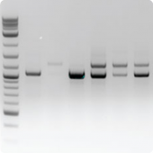 Genotyping and PCR